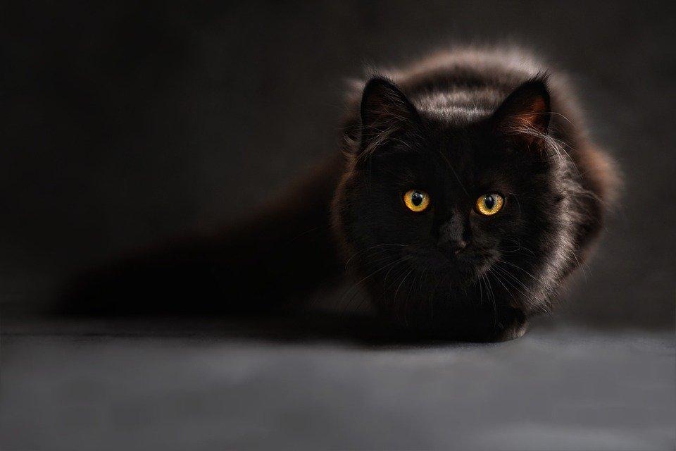 Leyenda del Gato Negro de Mexicali